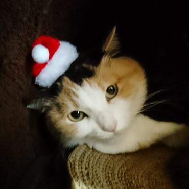 メリークリスマス by にゃんタクロース
