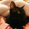 ネグレストから解放された黒猫、カール君 サムネイル7
