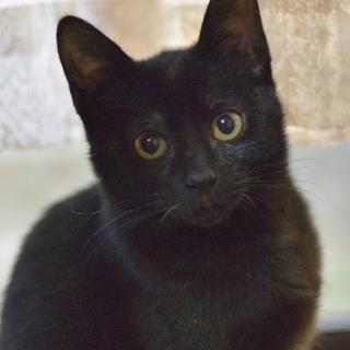飼いやすい黒猫と黒白の兄妹です。