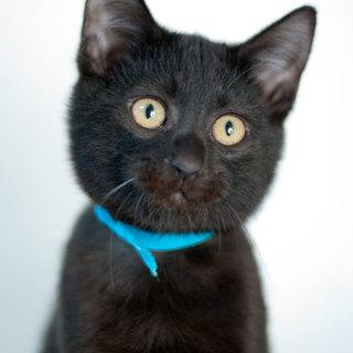 まん丸目の黒猫くん