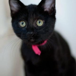 グリーンアイの黒猫