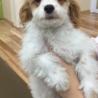生後4ヶ月のミックス犬です