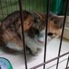 綺麗な三毛の子猫