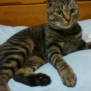 とても人懐こい猫です!