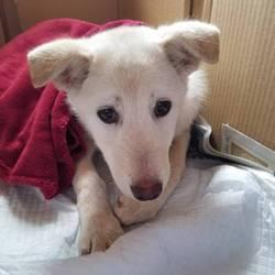 保護犬の譲渡会を開催します サムネイル3