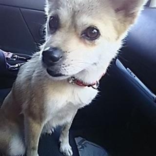 かわいい子犬?いえ、これでオトナです。