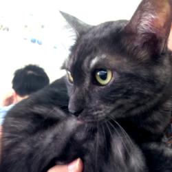 猫の譲渡会 名古屋市港区 サムネイル2
