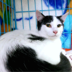 猫の譲渡会 名古屋市港区 サムネイル3