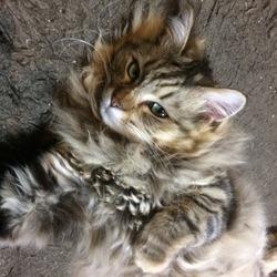 狭いところ大好きな猫ちゃんです(^-^)