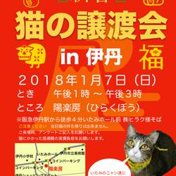 第11回‼️みゅうみゅう猫の譲渡会‼️