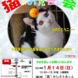 13:00~15:30 神戸西区 ゆったり ほっこり猫のお見合い会