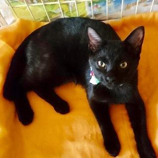 【ジャック】甘えん坊!少しビビリの黒猫くん