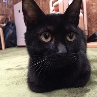 【がんも】人も猫も大好き、穏やかな男の子