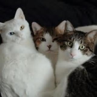 『ねこ猫ネコの会』の成猫ちゃん達に応募はこちら