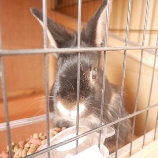 ウサギの兄妹の里親さんを探しています
