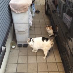 本日とうとう外猫2匹が自宅に入りました。