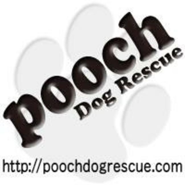 特定非営利活動法人pooch dog rescueのカバー写真