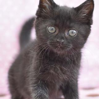 動きが面白すぎ★黒猫の育ちゃん