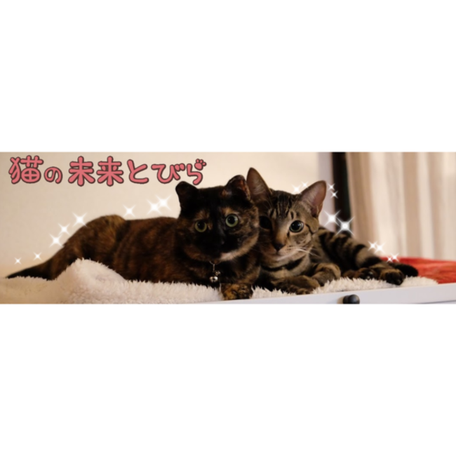 猫の未来とびらのカバー写真