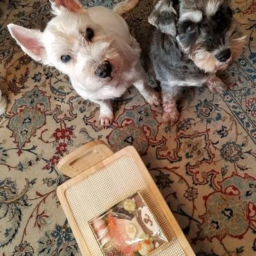 めぐっチョは犬生初の「おせち料理」だね(^_-)-☆
