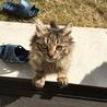 フサフサ毛の猫ちゃんです!