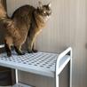 ソマリ成猫メス サムネイル2