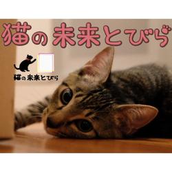 はじめまして「猫の未来とびら」です。