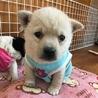 小さな子犬の兄妹です。日に日に可愛くなっています!