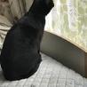 苦労して生きてきた美しい黒猫ハナちゃん サムネイル3