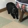苦労して生きてきた美しい黒猫ハナちゃん サムネイル5