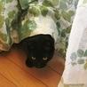 苦労して生きてきた美しい黒猫ハナちゃん サムネイル7
