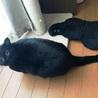 苦労して生きてきた美しい黒猫ハナちゃん サムネイル4