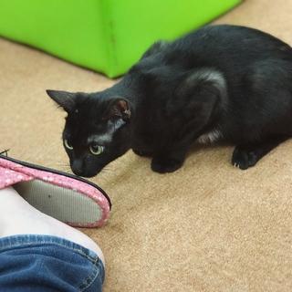 ジジみたいな黒猫【冬人】