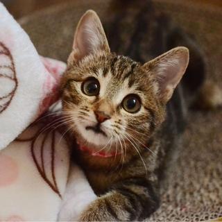 美猫の乙姫