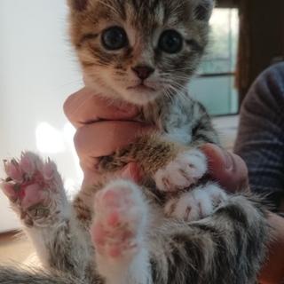 可愛い子猫 です  (*^▽^*)