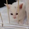 ママ猫を亡くした子猫ミルクくん