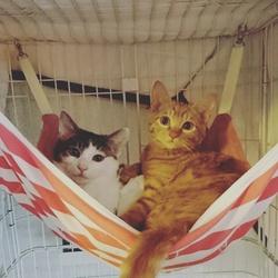 猫ちゃんの里親譲渡会IN高井戸・杉並