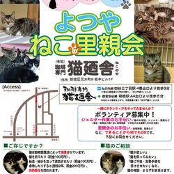 1月13日(土) 地域猫から社会猫へ FIPフリー 四谷猫廼舎 里親会(ボランティア募集中)