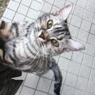 人懐っこいキジトラ子猫ちゃん