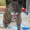 多頭飼育現場の愛情不足犬カンナ サムネイル2