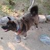 多頭飼育現場の愛情不足犬カンナ サムネイル6