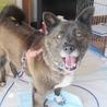 多頭飼育現場の愛情不足犬カンナ サムネイル7