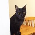 ◎性格良し!!ちょっと天然な楽しい黒猫君◎