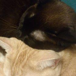 3匹猫団子♡