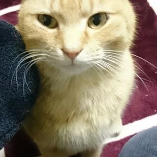 キュートな野良猫ちゃんです(=^ェ^=)