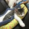 袖猫のミミィちゃん サムネイル3