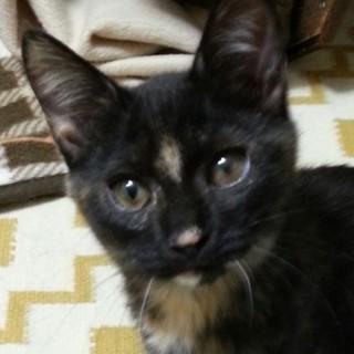 個性派サビ猫マムちゃん♪4ヶ月