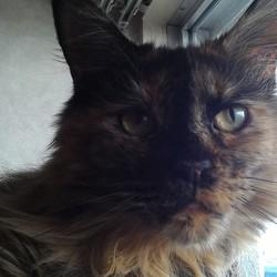 凶暴な猫のブラッシングの方法を教えて下さい