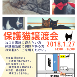 ★★大阪府寝屋川市にて保護猫譲渡会★★