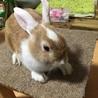 ミニウサギ サムネイル2
